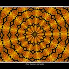 Marigolds Kaleidoscope #2 by Rose Santuci-Sofranko