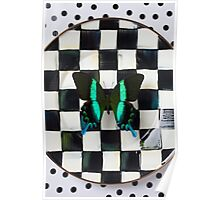 Butterfly on checker plate Poster
