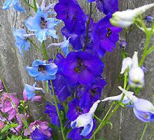 Pretty Delphinium by MaryinMaine