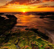 Mossy rocks by Geraldine Lefoe