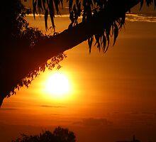 Parker Avenue Sunsets by Australis