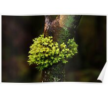 Moss Series #1- Nolte State Park Poster