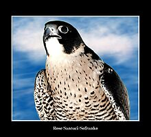 Peregrine Falcon #1 by Rose Santuci-Sofranko