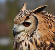 Bengal Eagle Owl - Bubo bengalensis by CraigSev