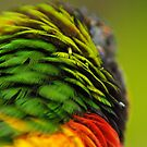 Flying Colors by rljphotography