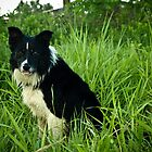 Mack the Border Collie by xtalline