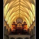 St. Joseph&#x27;s Cathedral Choir Loft - Organ Pipes by Rose Santuci-Sofranko