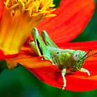 Grasshopper on Flower Petal Covered in Pollen by Ron Deage