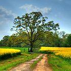 Canola Lane by Chelei