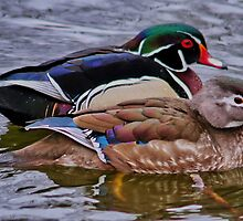 Mr & Mrs Wood Duck by AnnDixon