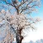 frozen tree by aurelie k