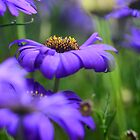purple flower 3 by Ranbir Singh