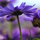 purple flower 4 by Ranbir Singh