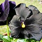 Black Flower by HeklaHekla
