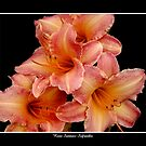 4 Lilies: Pink and Orange #2 by Rose Santuci-Sofranko