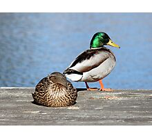 Life Is Just Ducky Photographic Print