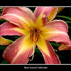 Lily: Pink and Yellow by Rose Santuci-Sofranko