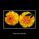 Marigolds by Rose Santuci-Sofranko