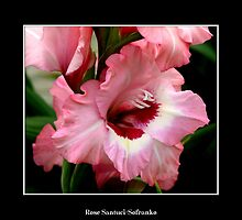 Gladiolas #1 by Rose Santuci-Sofranko