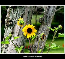 Sunflowers #2 by Rose Santuci-Sofranko