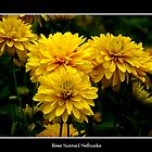 Yellow Flowers by Rose Santuci-Sofranko