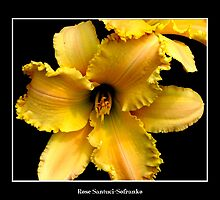 Lily: Yellow #2 by Rose Santuci-Sofranko