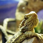 Lizard's Stare by AndrewBerry