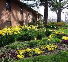 Spring comes to Greenbelt 3 by nealbarnett