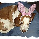 Waiting For The Easter Bunny by Darlene Bayne