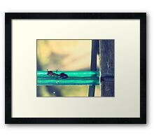04-12-11:  Ants On The Clothesline Framed Print