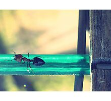 04-12-11:  Ants On The Clothesline Photographic Print