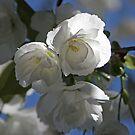 Blooming Brilliance by Patty (Boyte) Van Hoff