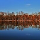 Spring Reflections by Tammy F