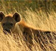"""Oh Spotted One"" - Spotted hyena - Kruger Nat. park by Sandy Beaton"