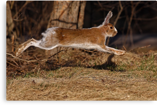 Run Rabbit Run! by Jim Cumming