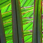 Fan Palm - Kew Gardens by Victoria limerick