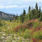 Scenic Alaska by Gary L   Suddath
