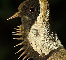 Mountain Horned Dragon, Acanthosaura crucigera, Khao Sok National Park, Thailand by Michal Cerny