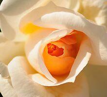 It's Spring Time by Neeraj Nema