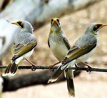 Birds on a wire by Liza Barlow