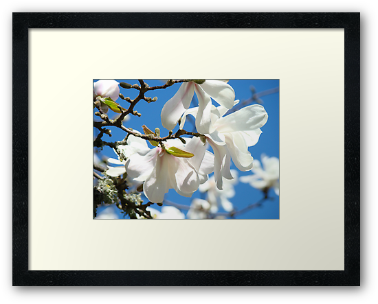 Trees White Flowering Magnolia Flowers Floral Baslee Troutman by BasleeArtPrints
