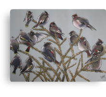Treetop Gathering [Bohemian Waxwings] Canvas Print