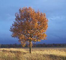 Beech Tree by Bridget Rust