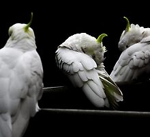 Cockatoo Party 2 by martyj