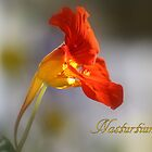Nasturtium by rasnidreamer
