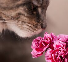 Curiosity - Maine Coon cat and flower by elainejhillson
