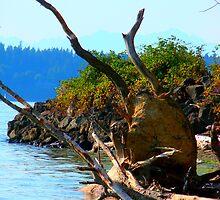 Northwest Roots  by Jessica Grunewald