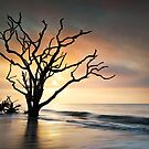 Boneyard Sunrise - Botany Bay, Edisto Island SC by Dave Allen
