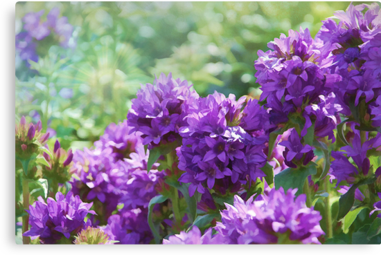 The Purple Garden  by Elaine  Manley