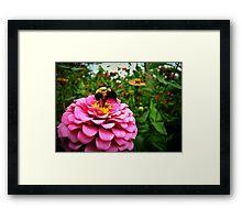 Pink Nectar  Framed Print